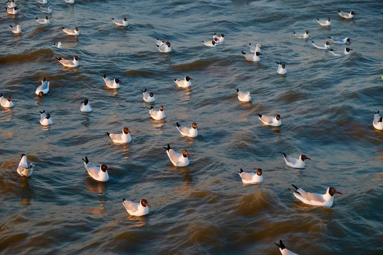 High angle view of seagulls in lake