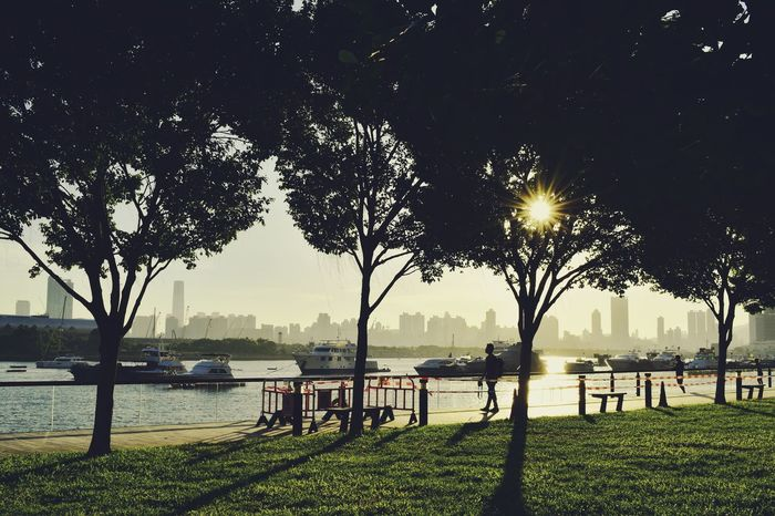 River Water Tree Bridge - Man Made Structure Outdoors Sky Nature No People City Beauty In Nature Day The Week On EyeEm Hongkongphotography Hkphotography Nature Park Life Silhouette