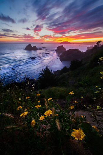 Sunset from the cliffs. Beauty In Nature Sunset Sky Scenics - Nature Water Plant Cloud - Sky Tranquil Scene Tranquility Sea Nature Orange Color Land Flower Flowering Plant Idyllic No People Yellow Growth Outdoors Horizon Over Water Flowers Daisies Landscape Seascape