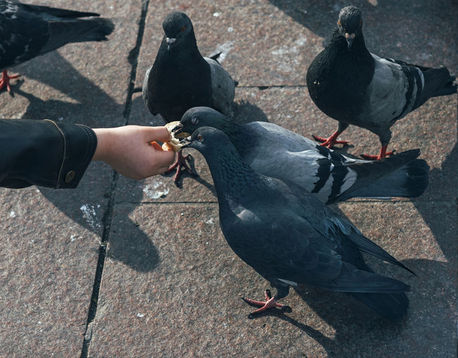 Cropped Hand Of Person Feeding Birds On Road