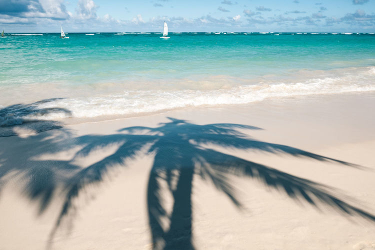 Sea Beach Water Land Sand Motion Sky Nature Wave Beauty In Nature Scenics - Nature Horizon Over Water Day No People Horizon Outdoors Aquatic Sport Sport Turquoise Colored Shadow Palm Tree Tropical Climate Atlantic Ocean Coconut Palm Tree Copy Space