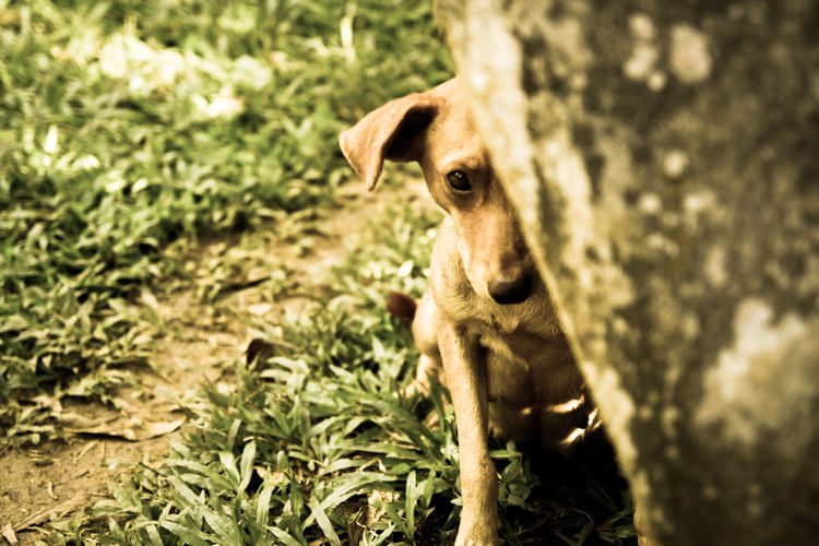 Shy dog Animal Themes Close-up Day Dog Dog In DR Domestic Animals Grass Kaki Dog Mammal Nature No People One Animal Outdoors Portrait Yamasa Dominican Re