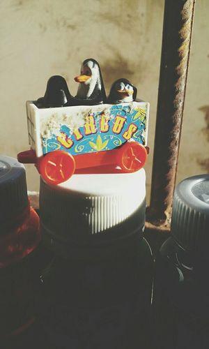 Meu Pinguinsdemadagascar Tintas ♡