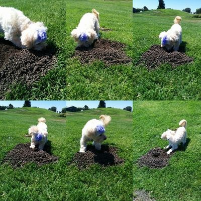 And this is how you dig a hole! Wilfred