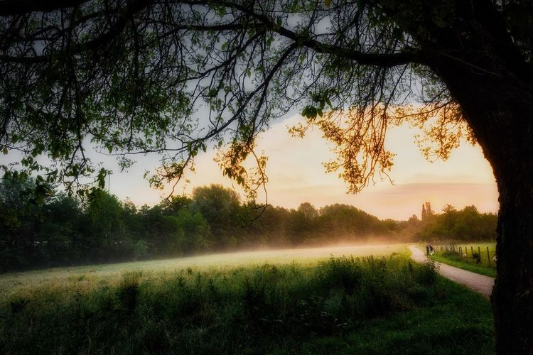 Sleepy Forest Tree Tranquil Scene Nature Tranquility Beauty In Nature Scenics Landscape Outdoors Fog Tree Trunk Grass Sunset Growth Day Branch Sky AMP PICTURES The Great Outdoors - 2017 EyeEm Awards The Great Outdoors - 2017 EyeEm Awards