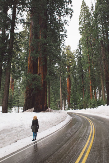 Cloudy Curly Hair Forest Full Length Girl Mountain Nature Nature One Person Real People Rear View Road Road Road Trip Sequoia Sequoia National Park Snow Snowing The Way Forward Transportation Tree Tree Trees Walking Winter The Great Outdoors - 2017 EyeEm Awards Breathing Space Been There. Lost In The Landscape California Dreamin