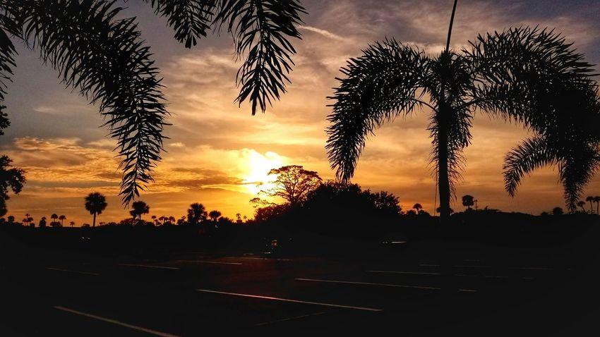 Good evening... 😊 EyeEm Best Shots EyeEmNewHere Landscape Florida EyeEm Nature Lover Tree Sunset Silhouette Sky Cloud - Sky Palm Tree Dramatic Sky Orange Color Sky Only Romantic Sky