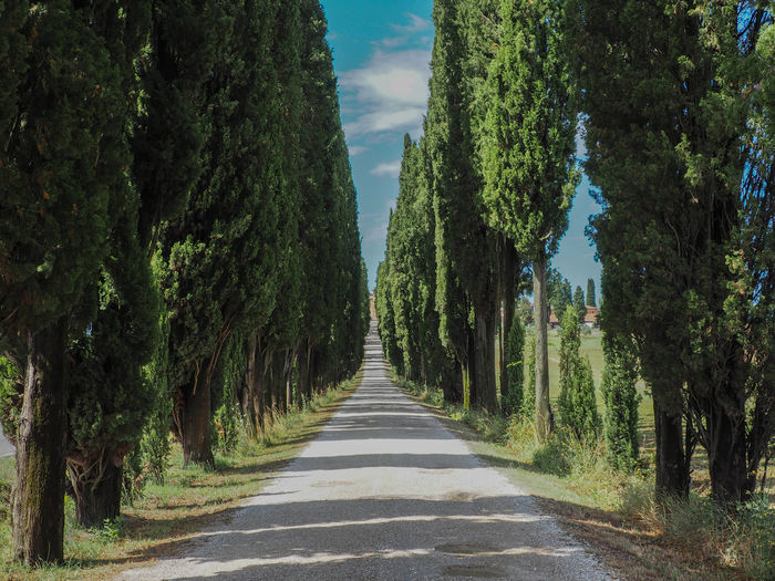 Italia Toscana Beauty In Nature Day Diminishing Perspective Empty Road Green Color Growth Italy Italy❤️ Italy🇮🇹 No People Outdoors Plant Road Scenics - Nature Sky The Way Forward Toscana ıtaly Toscany Tranquil Scene Tranquility Tree Treelined vanishing point
