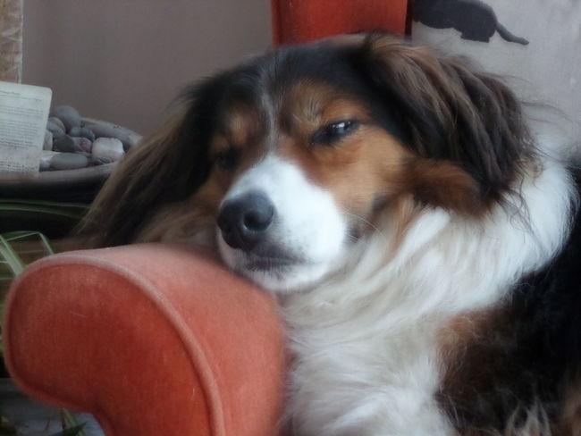 Dog Life Pip Snooze After Walks