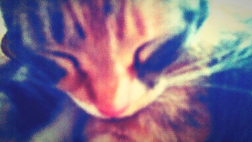 Pets Corner Catoftheday Editjunky Edit Junkie EyeEm Best Edits Popular Photos Color Explosion Cat Cat♡ EyeEm Animal Lover