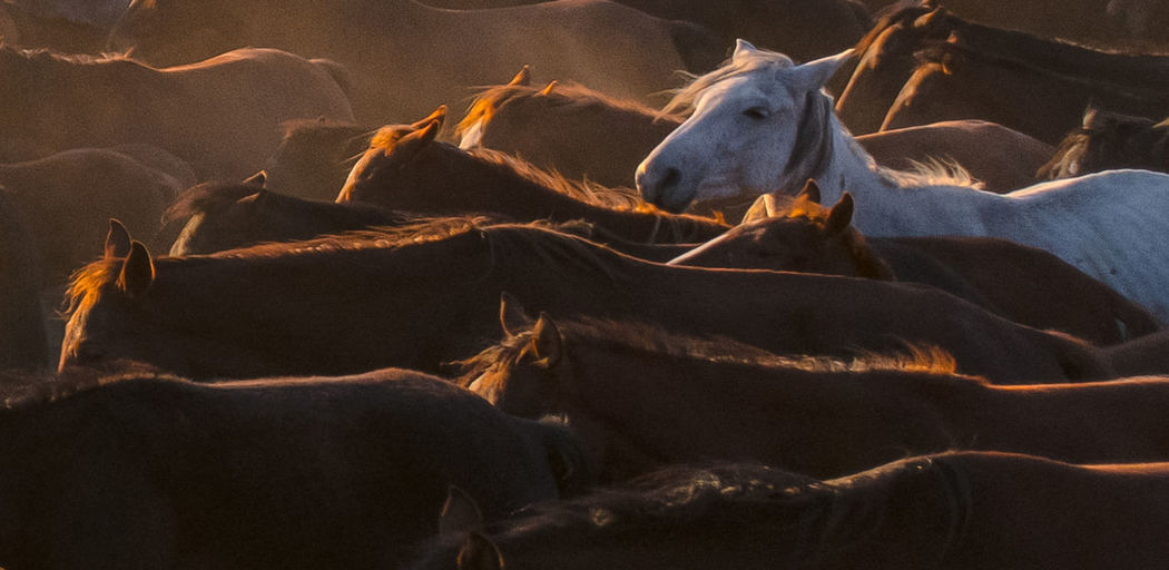 We all need freedom. Nikon D850 Freedom Animals In The Wild Horse Photography  Living Planet Horse Lovers Horse Portrait White Horse Wildlife Freedom! Dreaming Animal Wildlife Dust Horses My Best Photo My Best Photo
