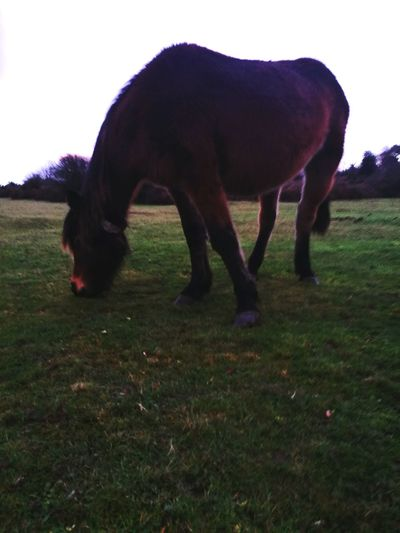 First Eyeem Photo Horses Pony New Forest, Hampshire. UK