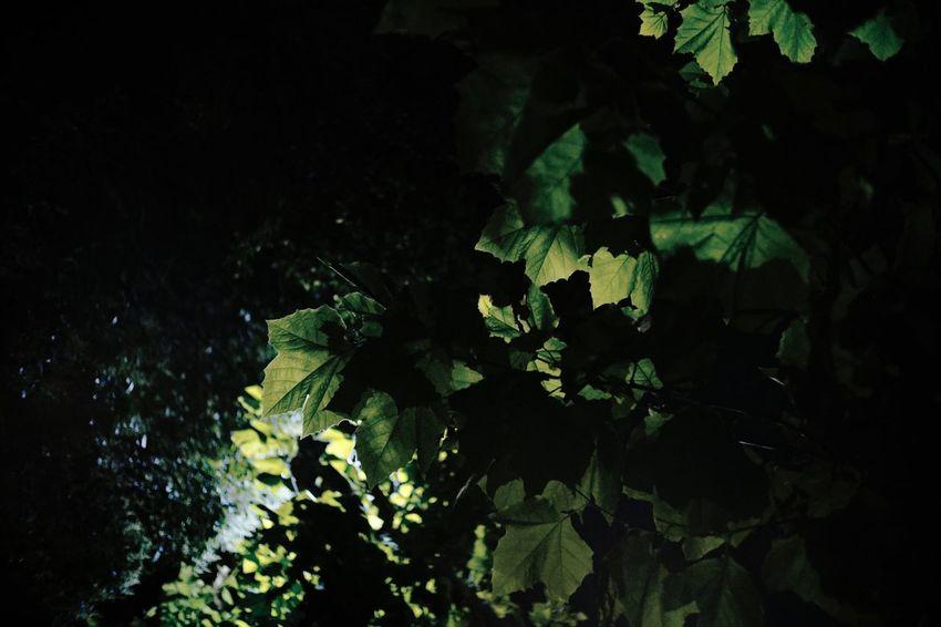 Plant Growth Tree Night Nature Plant Part Leaf