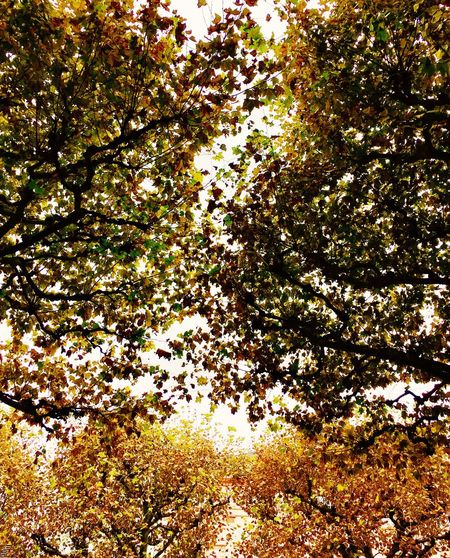 Tree Growth Branch Low Angle View Sunlight Scenics Nature Beauty In Nature Tranquility Day Tranquil Scene Flower Outdoors Freshness Sky Summer Green High Section Non-urban Scene Fragility