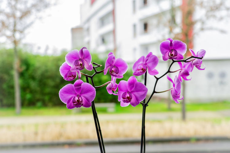 Flowering Plant Flower Plant Pink Color Freshness Beauty In Nature No People Purple Nature Fragility Petal