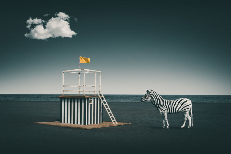 Digital composite image of zebra by lifeguard at beach