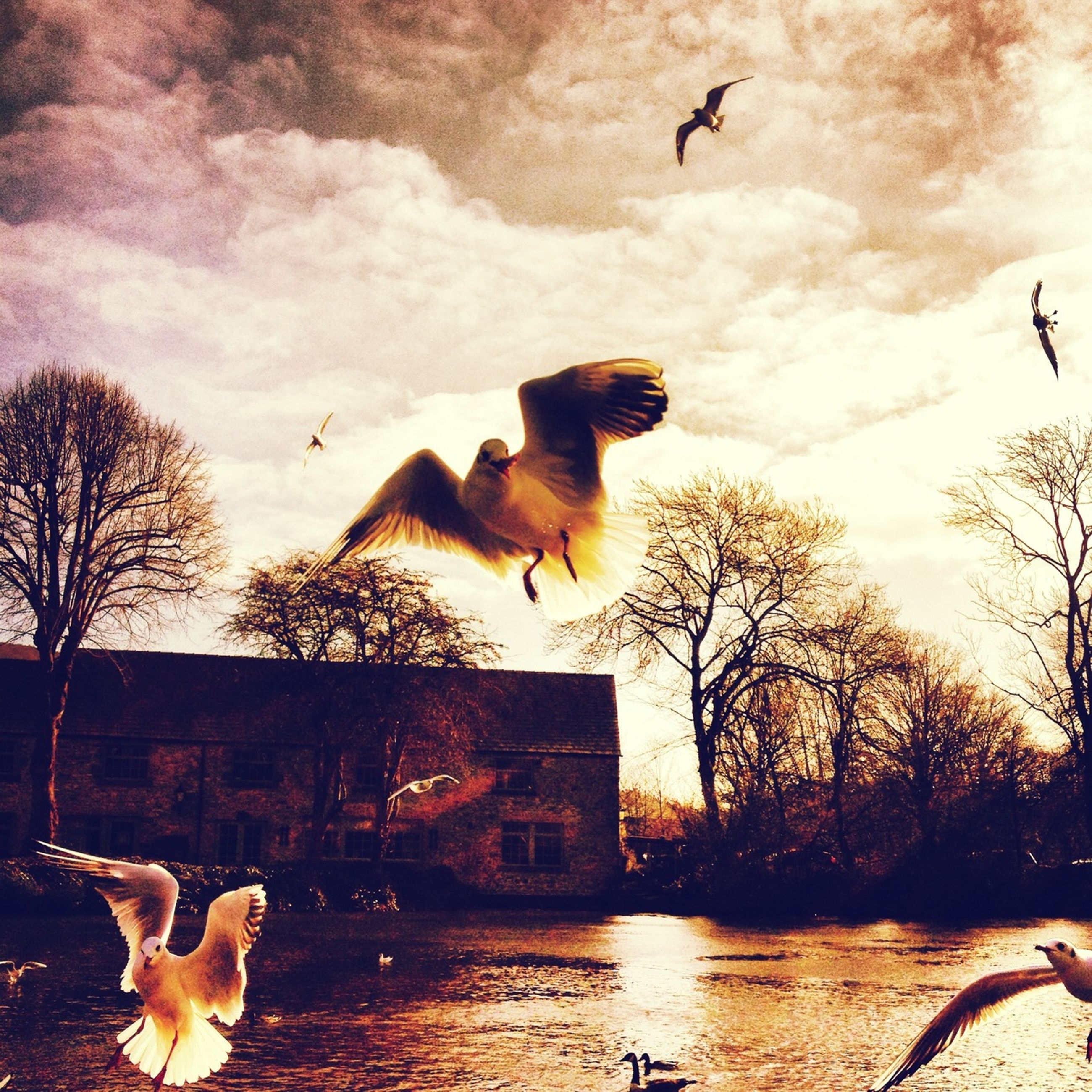 bird, animals in the wild, animal themes, wildlife, flying, flock of birds, spread wings, sky, building exterior, medium group of animals, mid-air, seagull, built structure, architecture, tree, bare tree, silhouette, nature, water