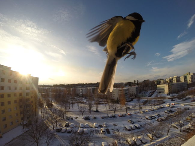 Bird Cold Finland Gopro Morning Snow Sun Winter