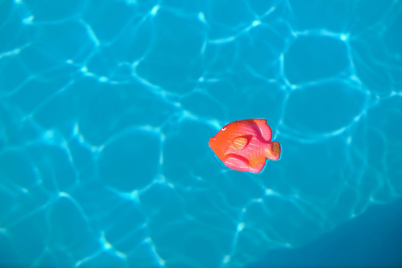 Toy Fish Floating In Swimming Pool
