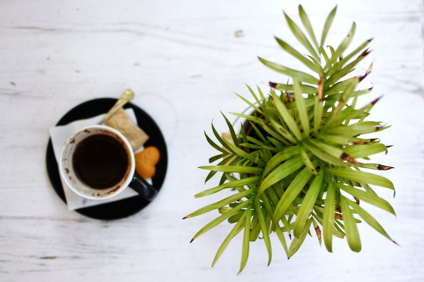 Coffee Relaxing Leaves Greenery Decoration Cafe Modern Plants And Flowers Plant Blackcoffee Vivid Colours  Coffee Time Cupofcoffee Blackmug Enjoying Life 35mm