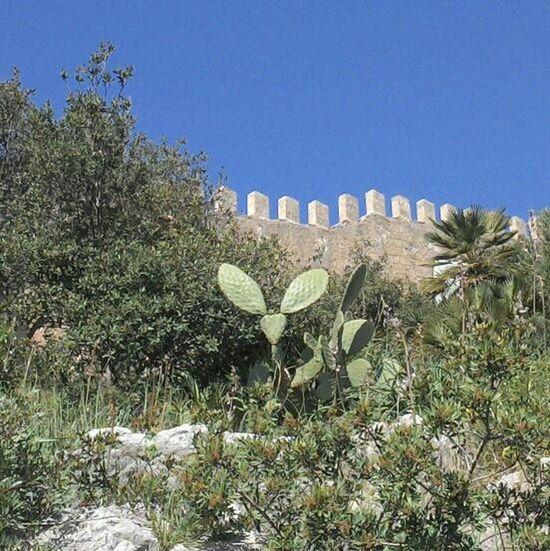 cactus vorm castell Cala Ratjada