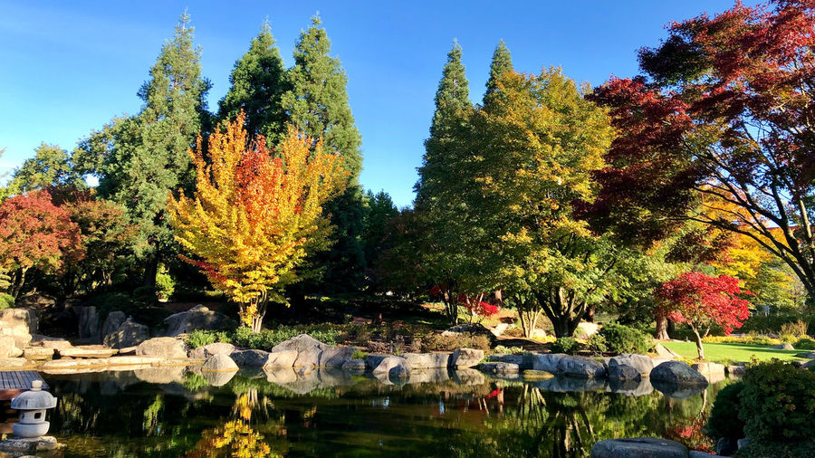 Fall colours in Planten un Blomen city park in Hamburg, Germany Tree Plant Autumn Nature Water Change Sky Day Growth Lake Reflection No People Outdoors Beauty In Nature Park Park - Man Made Space Tranquility Sunlight
