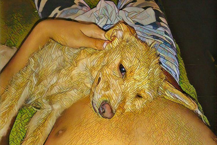 Animal Themes One Animal Dog Te Amoooo