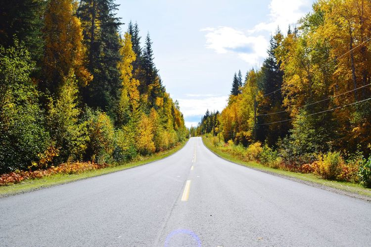 Fall Wanderlust Hikingadventures Nature Canada Icefields Parkway Kanada Panorama Fall Wells Gray Provincial Park Yellow Weg Tree Road Diminishing Perspective Sky Empty Road Double Yellow Line Mountain Road Asphalt Dividing Line Yellow Line Growing Country Road Countryside Treelined The Way Forward Leading Two Lane Highway Straight Road Marking