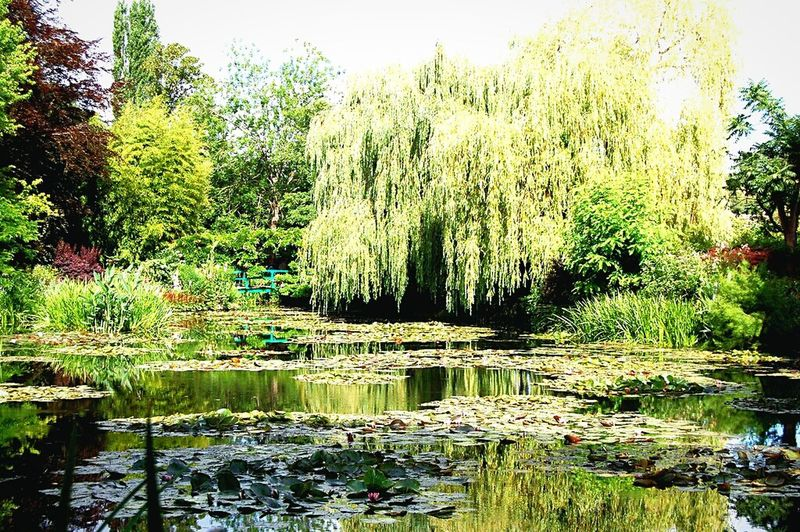 Willow Tree and Bridge in Monet's GardenGivenchy Willow Tree Garden Photography Fine Art Photography Monet Garden Lillypads France Water Reflection Beauty In Nature Plant No People Famous Place Outdoors Lake Monet House Tranquility