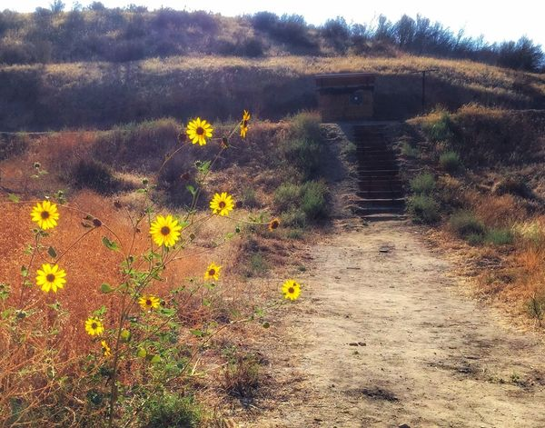 Beauty and tranquility on the range! Archery Range Nature Photography Nature_collection Tranquil Scene Flowers Contemplative Hillside Simi Valley Tapo Canyon Conejo Valley Archers