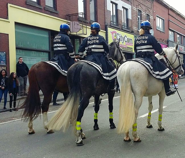 Domestic Animals Horse Outdoors Animal Themes Famous Place City Day Belgium. Belgique. Belgie. Belgien. Etc. Policewoman Policeman Police Horses Police Uniform Policeofficer Adults Only конная полиция Mounted Police лошадь La Police Montée