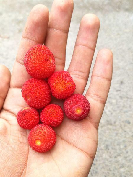 Fruits ♡