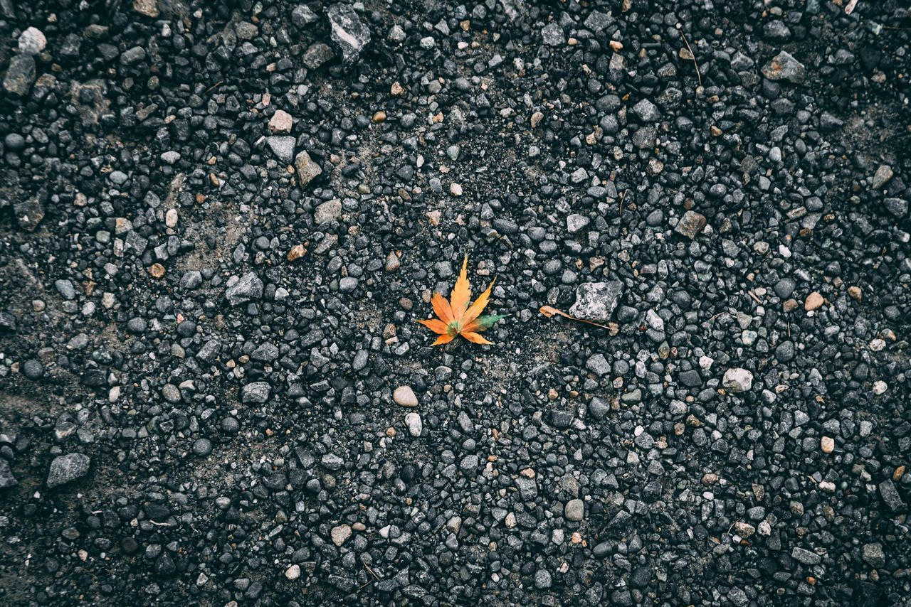 nature, high angle view, day, no people, road, close-up, asphalt, leaf, plant part, textured, city, street, outdoors, autumn, change, fragility, solid, land, rough, vulnerability, gravel, flower, leaves