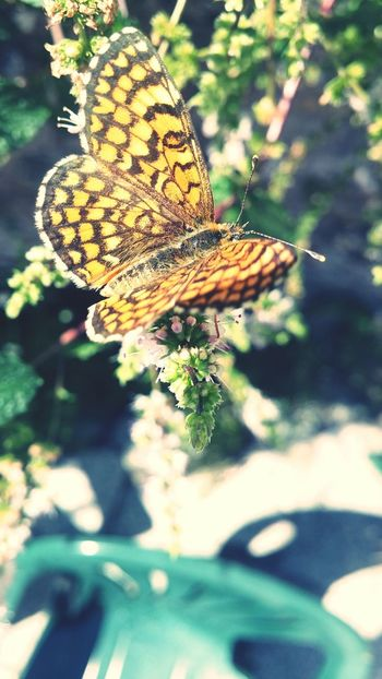 Butterfly Butterfly Collection Butterflies Butterfly ❤ Flower Flowers EyeEm Best Shots Macro Photography Focus On Macro Beauty EyeEm Nature Lovers EyeEm Best Shots - Nature Nature Photography Cruziper Photography
