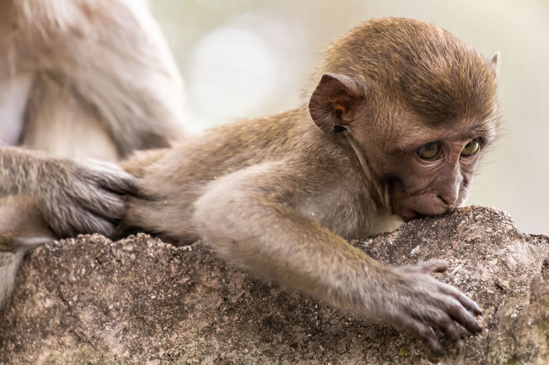 Close-up of young monkey on tree trunk