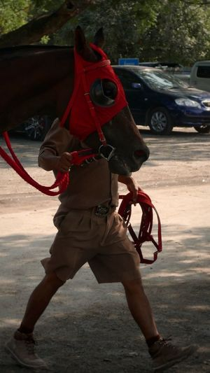 Horse man Horse Real People Full Length One Person Day Outdoors Men Nature