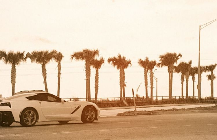 Took this in West Palm Beach Today Carporn Car Ride  Paradise Heaven Tropical Paradise Palm Trees Need For Speed Mein Automoment