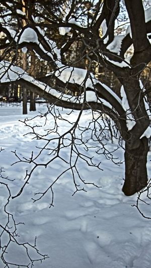 hdr фотографспб Морозисолнце любимыйгород любимоедело делайчтонравится Vorobeva_yana Vorobeva_foto Photography Photograferspb Saintpetersburg M Outdoors Beauty In Nature Day Branch Landscape No People Bare Tree Snowing