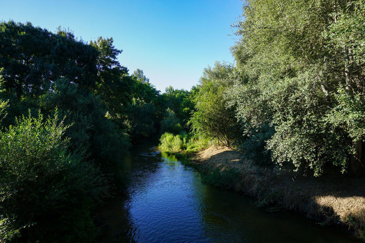 River flowing amidst trees in forest against sky