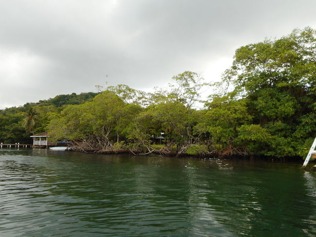 Honduras Roatan Bay Islands Beauty In Nature Cloud - Sky Day Green Color Growth Lake Nature No People Outdoors Scenics Sky Tranquility Tree Water Waterfront