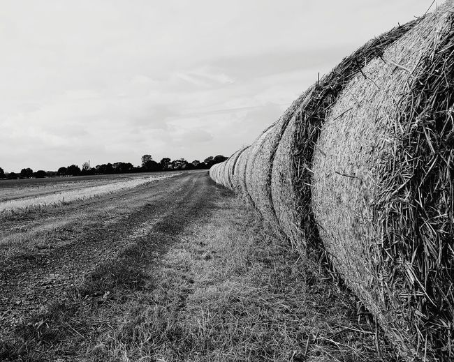 Agriculture Field Rural Scene Cloud - Sky Crop  Day Landscape Nature No People Outdoors Sky Bales Of Hay  Black And White Photography Trees In The Distance