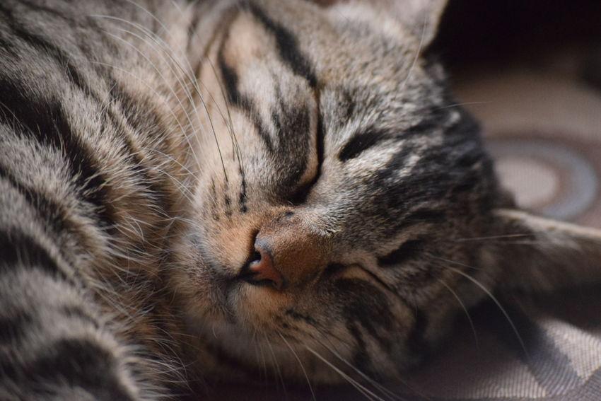 FeLiNa Felino Gatos Gatitos Cats Cat Animals Animal Pelos Leslie_Gr_In Mascota Mascotas 🐶 Mascotas Dormir Dormido Sueño