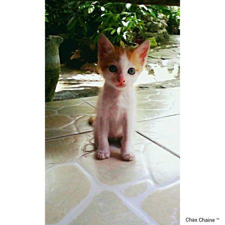 i'm ready to pose :) Gata ♡ Cats 🐱 Cute Pets😻