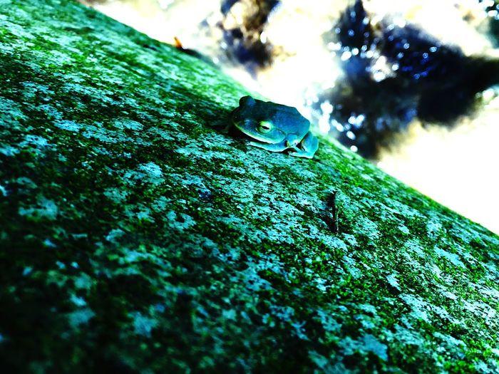 Frog カエル 夏 川