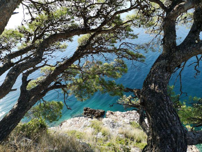Sea Tree Branch