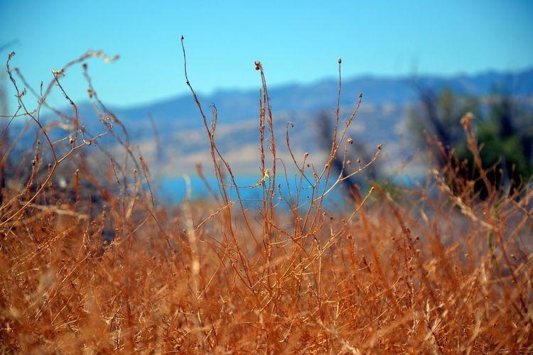 Aucun filtre sur cette photo, les couleurs sont magnifiques à la base ! Trip To  Californie Summer2014 First Eyeem Photo