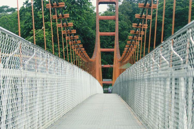 Empty footbridge amidst trees
