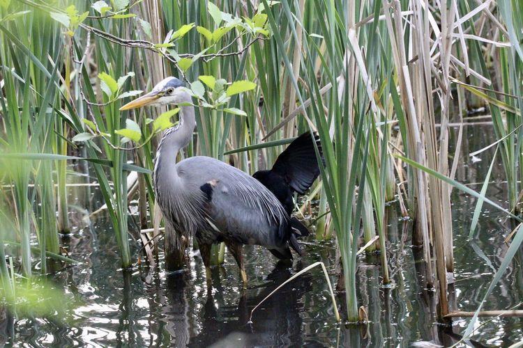 View of heron in lake