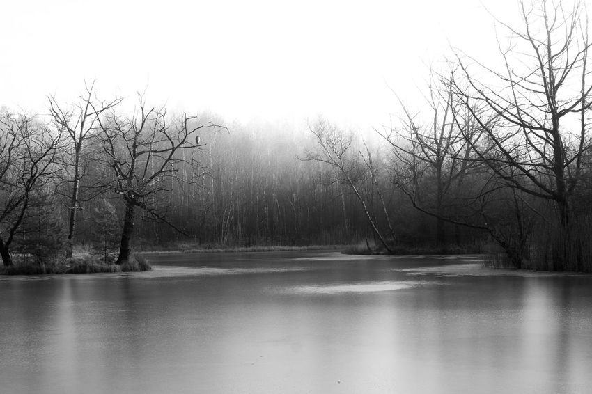 lake of distress Cold Temperature Distress Lake Nature Ohligser Heide Season  See Tristesse Winter