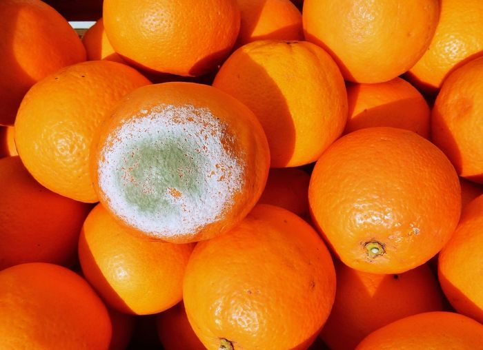 Arancia Frutta Agrume Ammuffita Citrus Fruit Close-up Decomposizione Food Food And Drink Freshness Fruit Funghi Healthy Eating Marcia Muffa Navel No People Orange Color Particolare Siciliana Spore Still Life Wellbeing